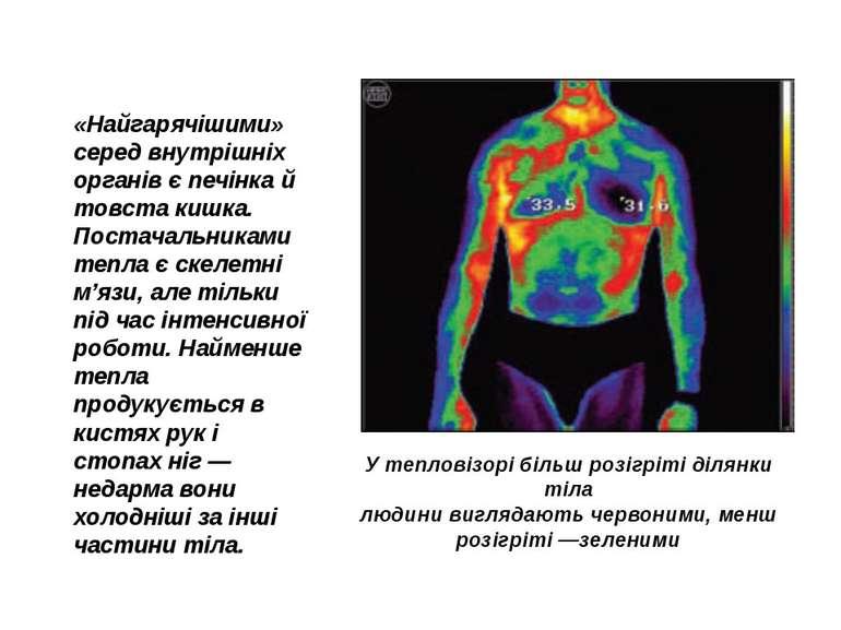 «Найгарячішими» серед внутрішніх органів є печінка й товста кишка. Постачальн...