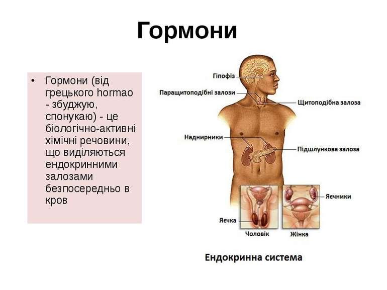 Гормони (від грецького hormao - збуджую, спонукаю) - це біологічно-активні хі...