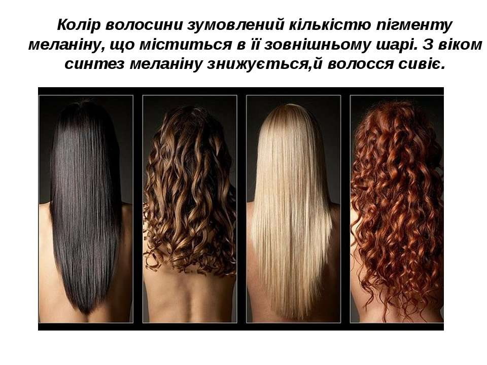 Колір волосини зумовлений кількістю пігменту меланіну, що міститься в її зовн...