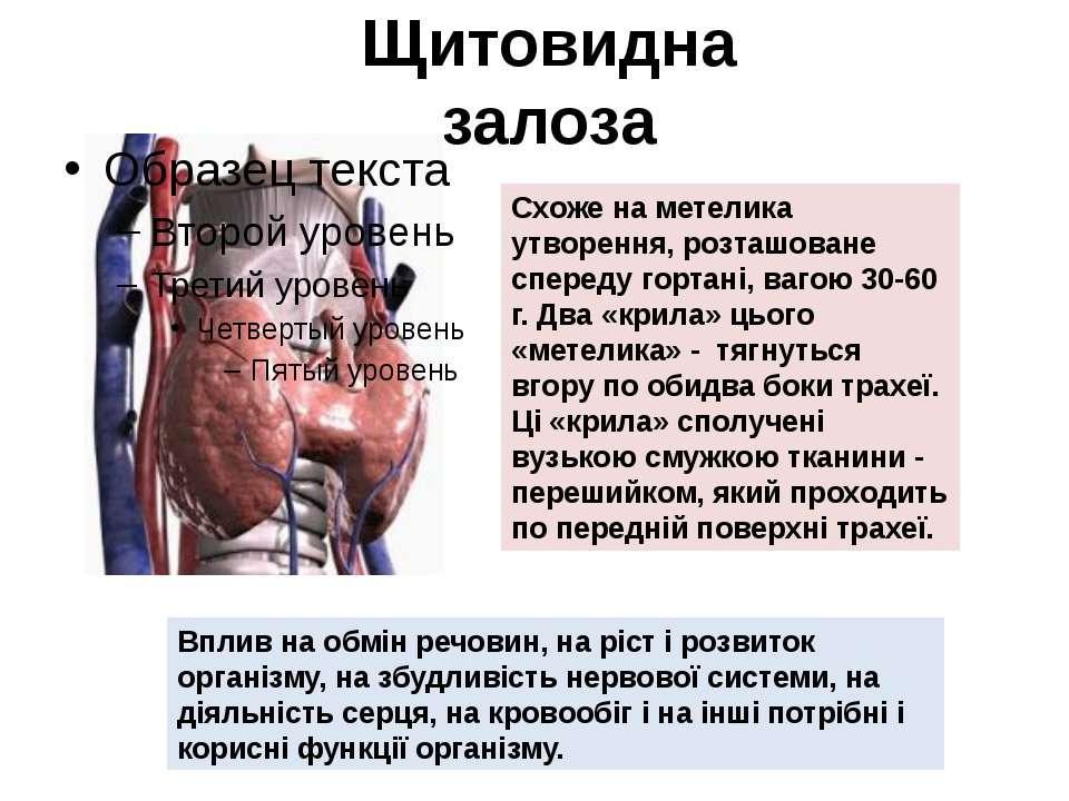 Щитовидна залоза Схоже на метелика утворення, розташоване спереду гортані, ва...