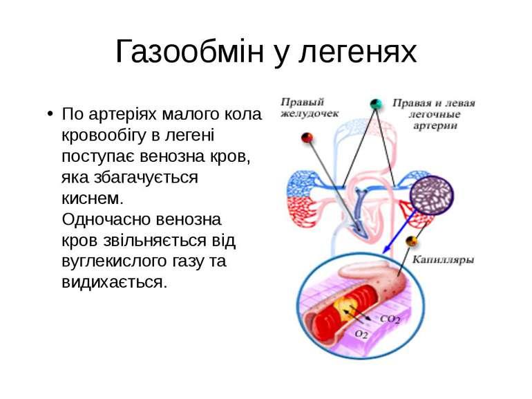 Газообмін у легенях По артеріях малого кола кровообігу в легені поступає вено...