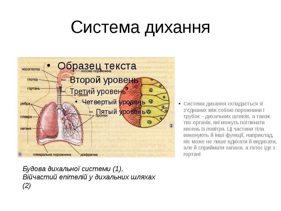 Система дихання Система дихання складається зі з'єднаних між собою порожнини ...