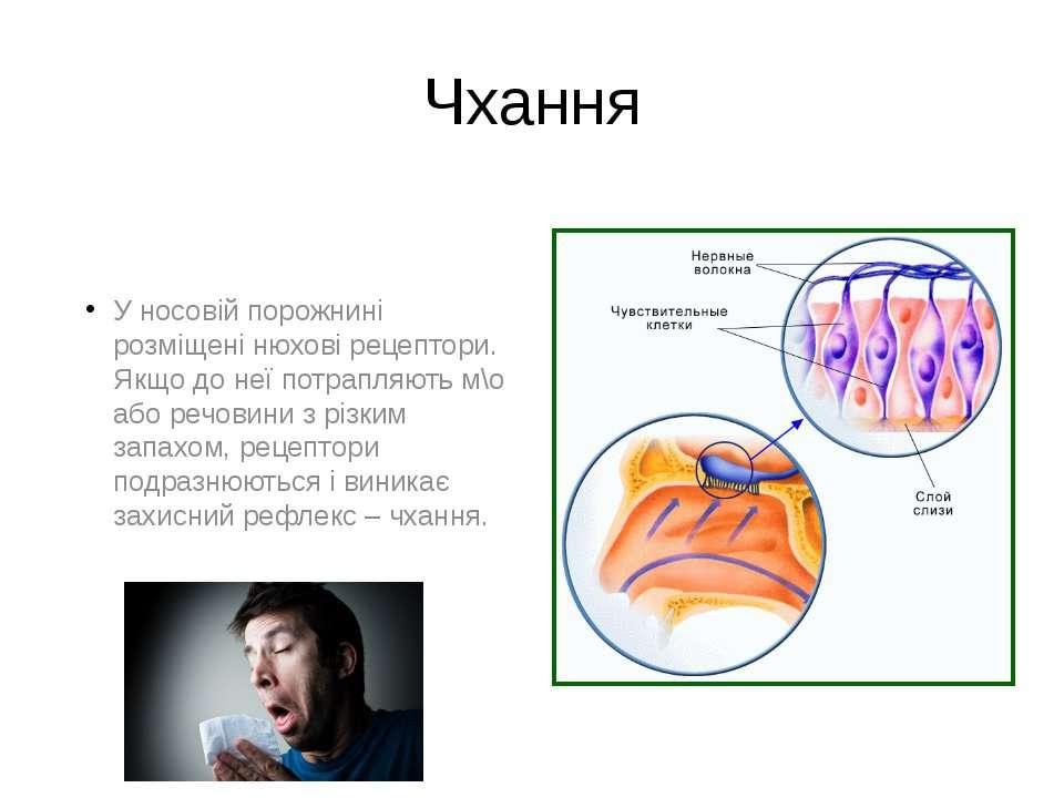 Чхання У носовій порожнині розміщені нюхові рецептори. Якщо до неї потрапляют...