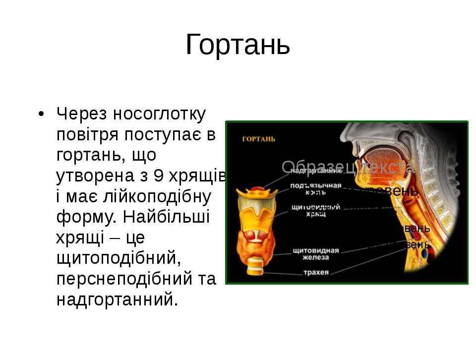 Гортань Через носоглотку повітря поступає в гортань, що утворена з 9 хрящів і...