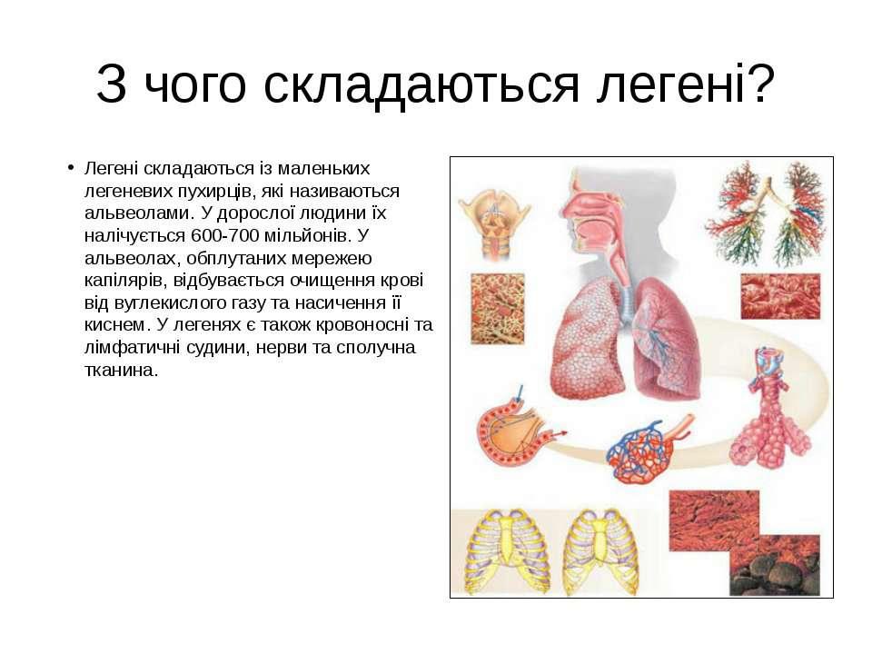 З чого складаються легені? Легені складаються із маленьких легеневих пухирців...