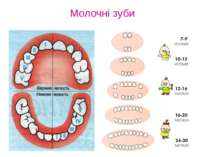 Молочні зуби