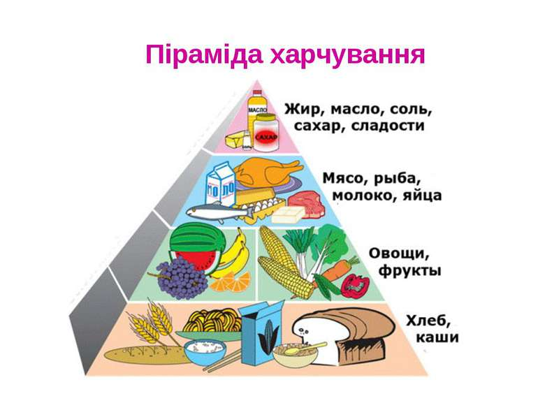 Піраміда харчування