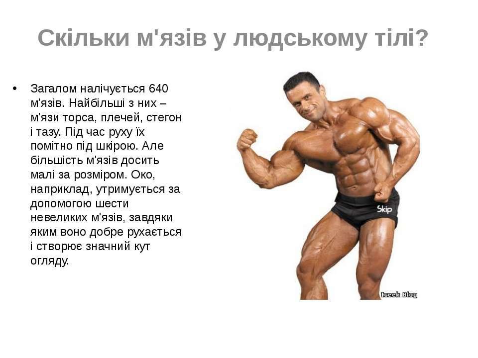 Скільки м'язів у людському тілі? Загалом налічується 640 м'язів. Найбільші з ...