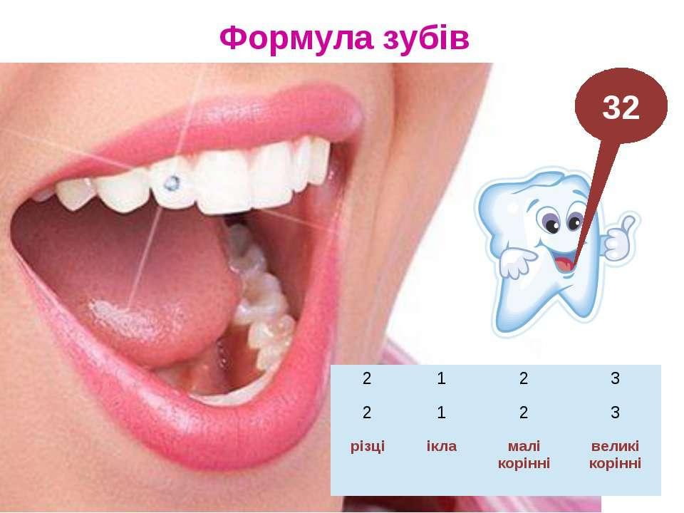 Формула зубів 32 2 1 2 3 2 1 2 3 різці ікла малі корінні великі корінні