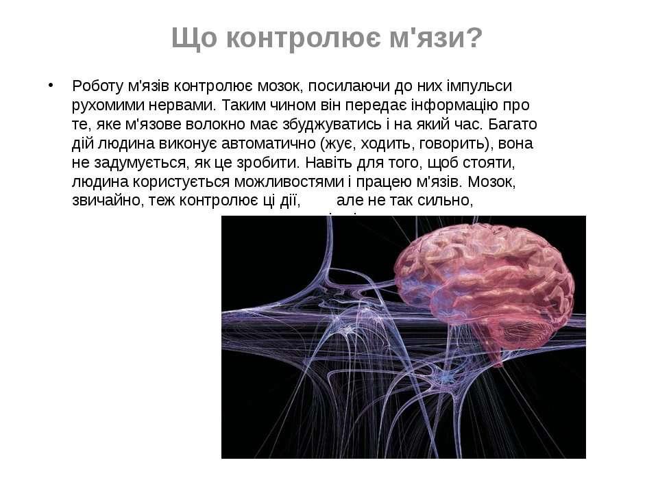 Що контролює м'язи? Роботу м'язів контролює мозок, посилаючи до них імпульси ...