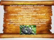 Задача. «Стрибок мавпи» На дереві сиділи дві мавпочки: одна на самій верхівці...