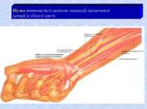 Пульс визначається шляхом пальпації променевої артерії в області кисті.
