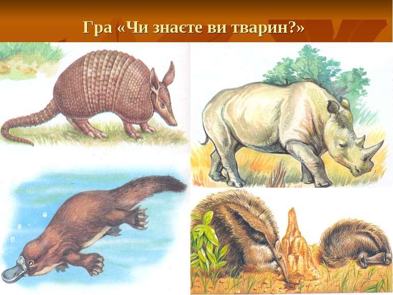 Гра «Чи знаєте ви тварин?»