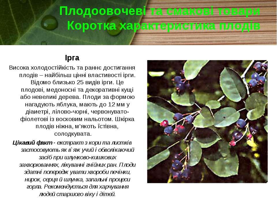 Плодоовочеві та смакові товари Коротка характеристика плодів Ірга Висока холо...