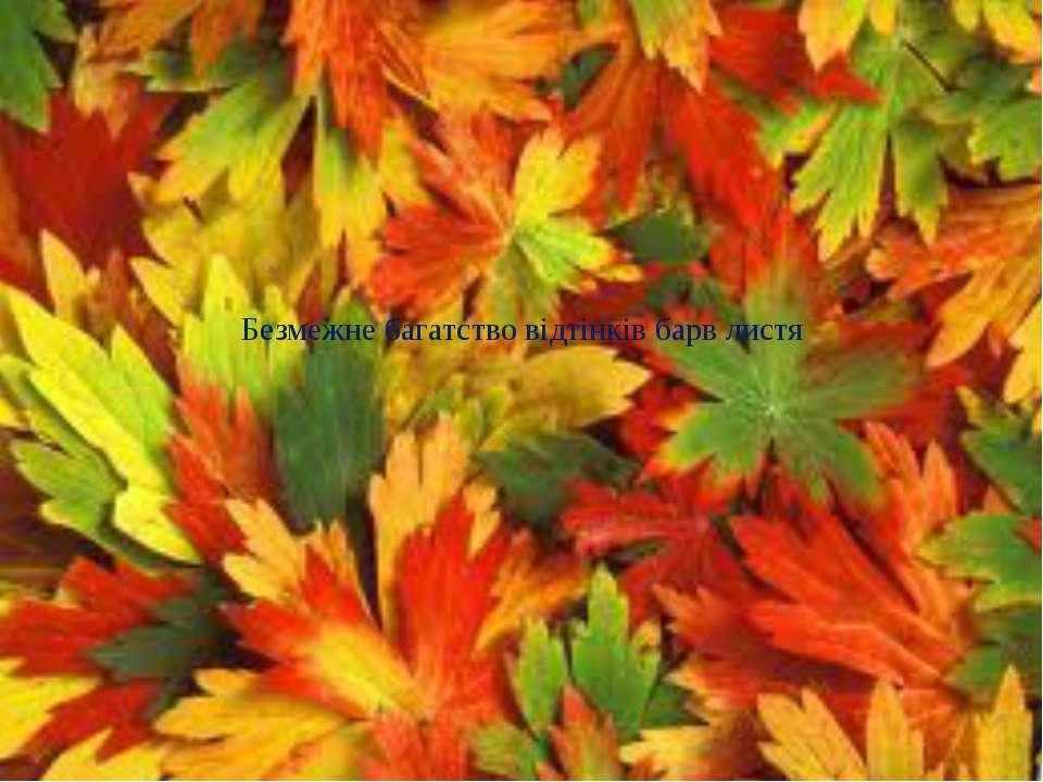 Безмежне багатство відтінків барв листя