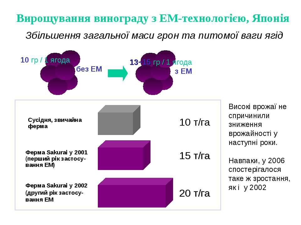 Збільшення загальної маси грон та питомої ваги ягід Вирощування винограду з Е...