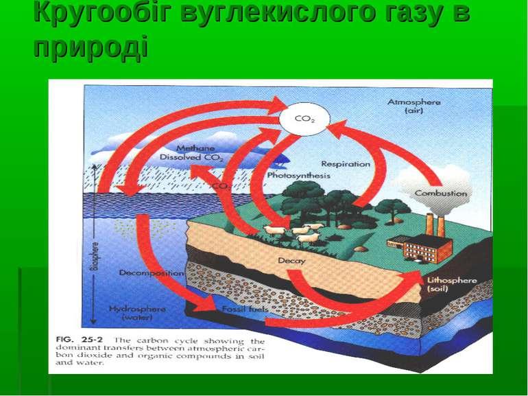 Кругообіг вуглекислого газу в природі