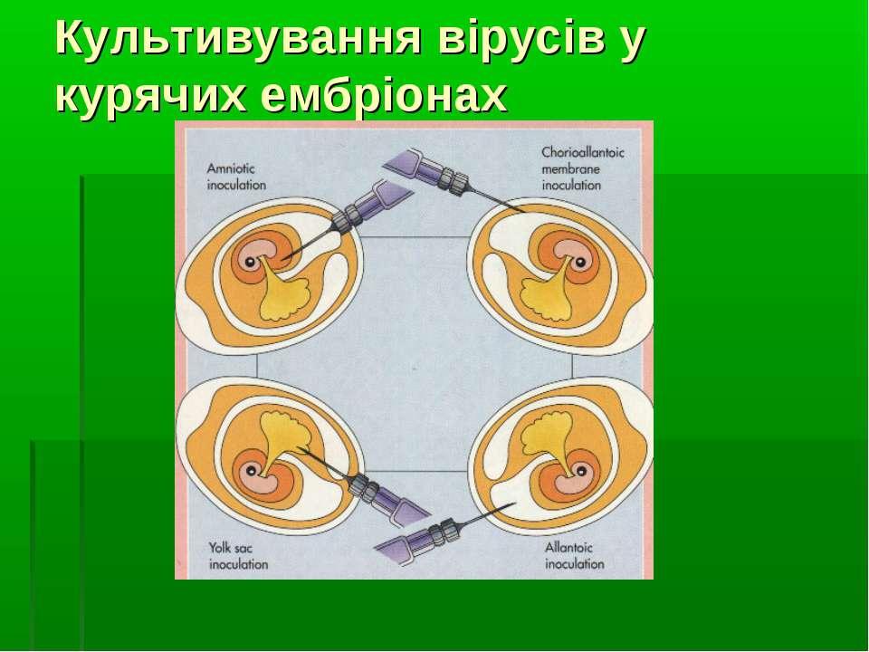 Культивування вірусів у курячих ембріонах