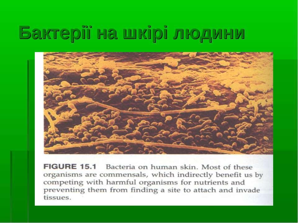 Бактерії на шкірі людини