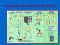 Етапи виділення чистої культури бактерій