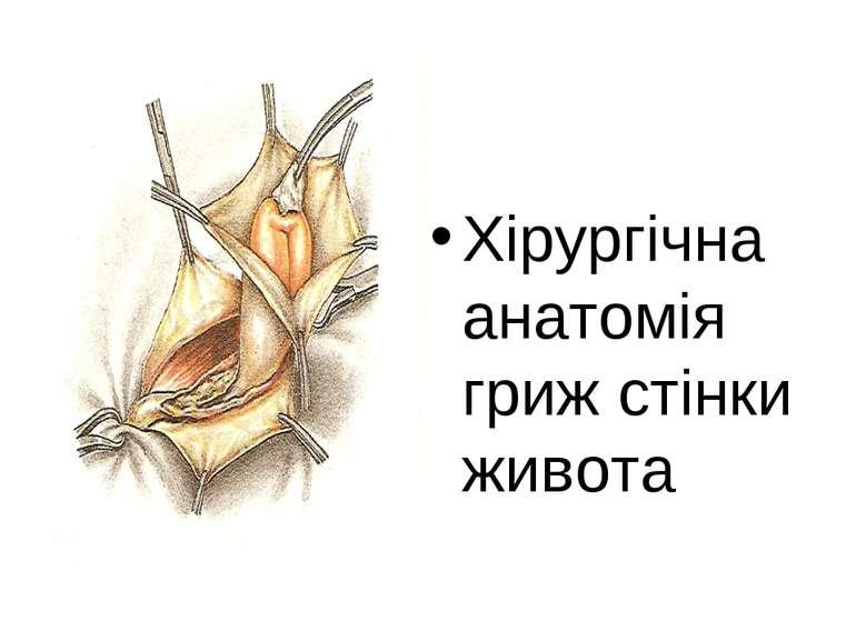 Хірургічна анатомія гриж стінки живота