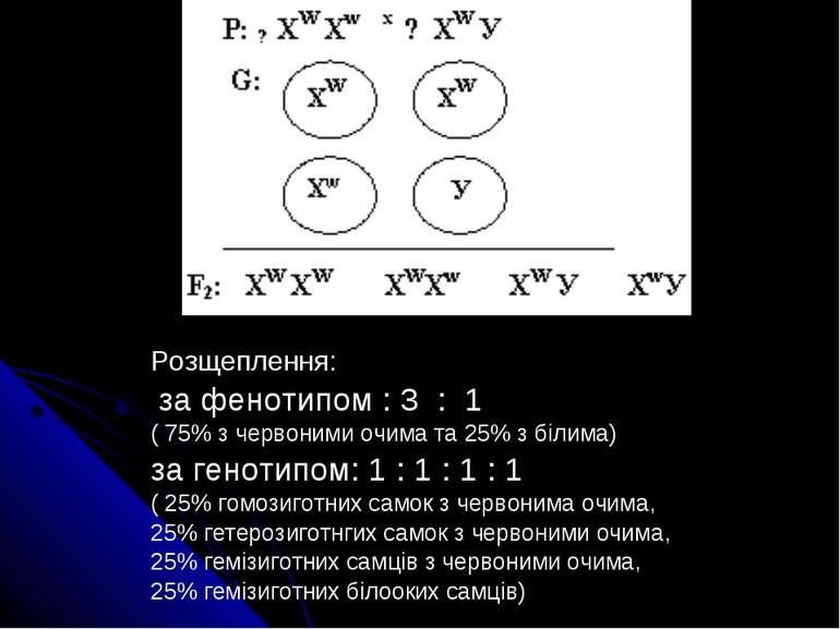 Розщеплення: за фенотипом : 3 : 1 ( 75% з червоними очима та 25% з білима) за...