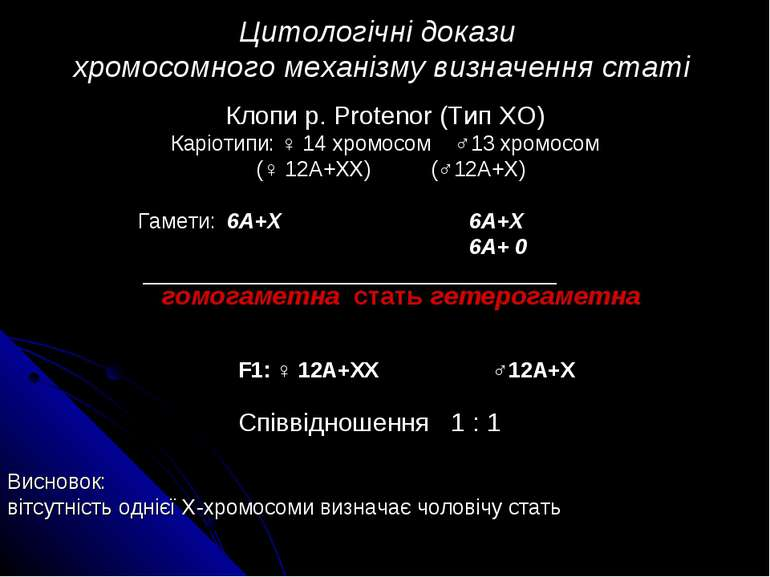 Цитологічні докази хромосомного механізму визначення статі Клопи р. Protenor ...