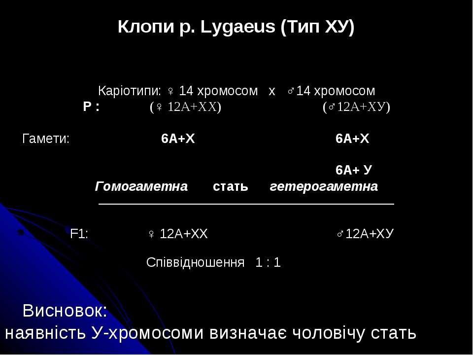 Клопи р. Lygaeus (Тип ХУ) Каріотипи: ♀ 14 хромосом х ♂14 хромосом Р : (♀ 12А+...