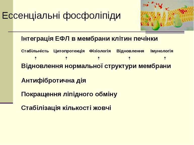Ессенціальні фосфоліпіди