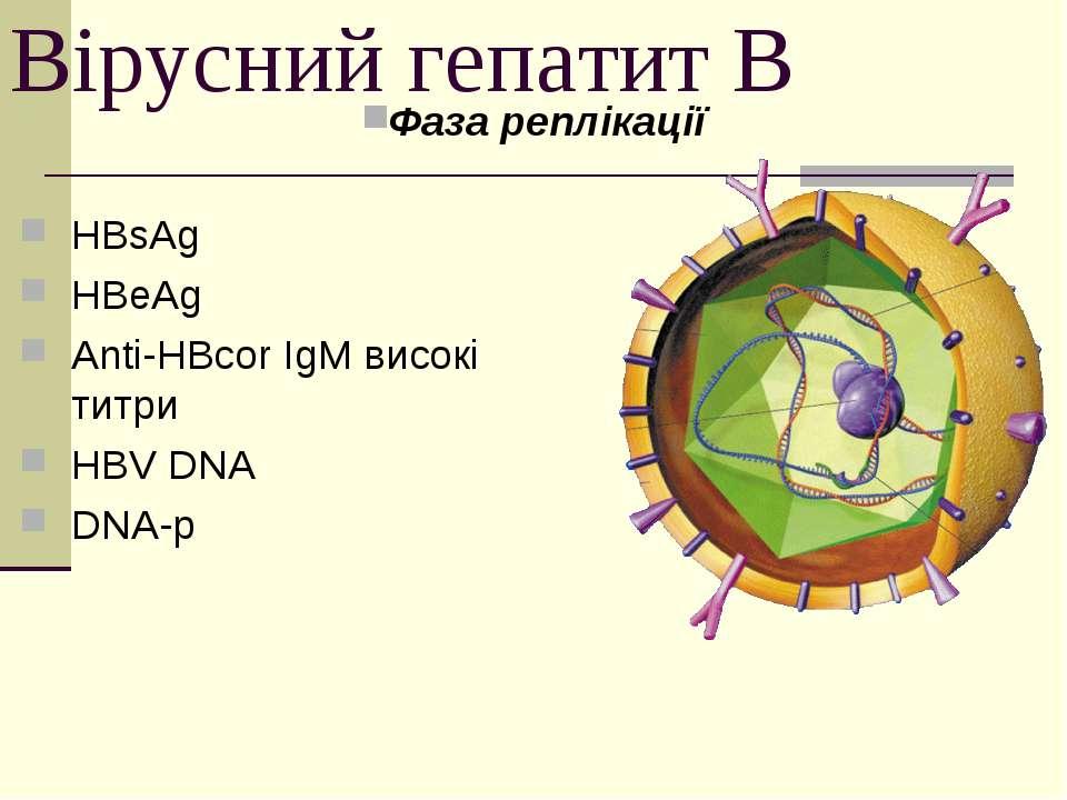 Вірусний гепатит В Фаза реплікації HBsAg HBeAg Anti-HBcor IgM високі титри HB...