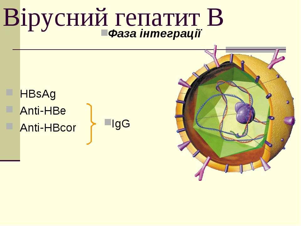 Вірусний гепатит В Фаза інтеграції HBsAg Anti-HBe Anti-HBcor IgG