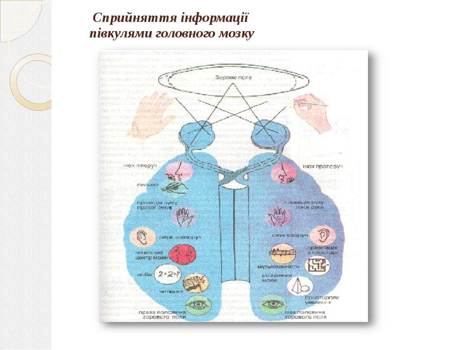 Сприйняття інформації півкулями головного мозку