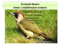 Зелений дятел птах з найдовшим язиком