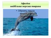 Афаліна найбільша морська тварина