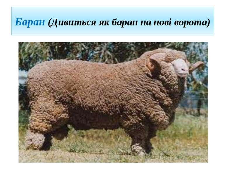 Баран (Дивиться як баран на нові ворота)