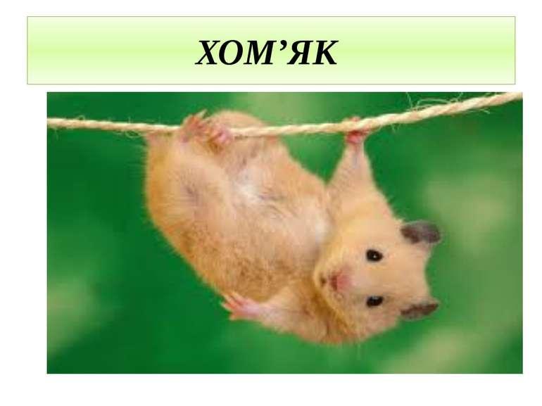 ХОМ'ЯК