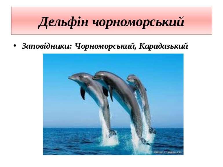 Дельфін чорноморський Заповідники: Чорноморський, Карадазький