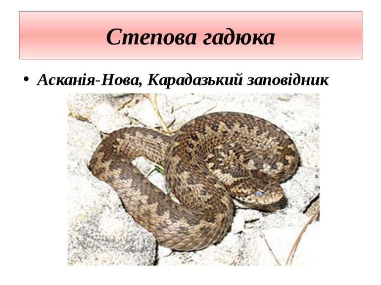 Степова гадюка Асканія-Нова, Карадазький заповідник