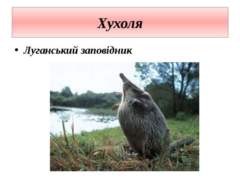Хухоля Луганський заповідник