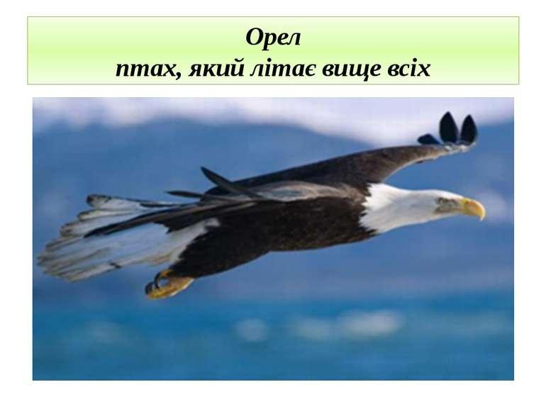 Орел птах, який літає вище всіх