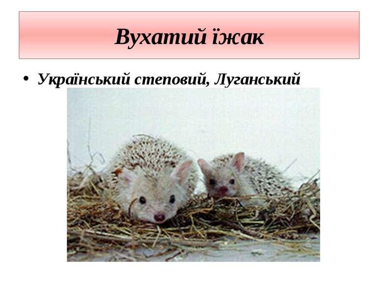 Вухатий їжак Український степовий, Луганський
