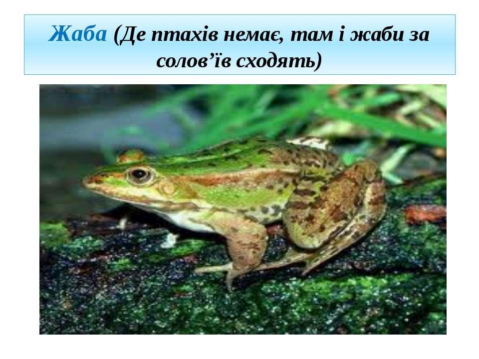 Жаба (Де птахів немає, там і жаби за солов'їв сходять)