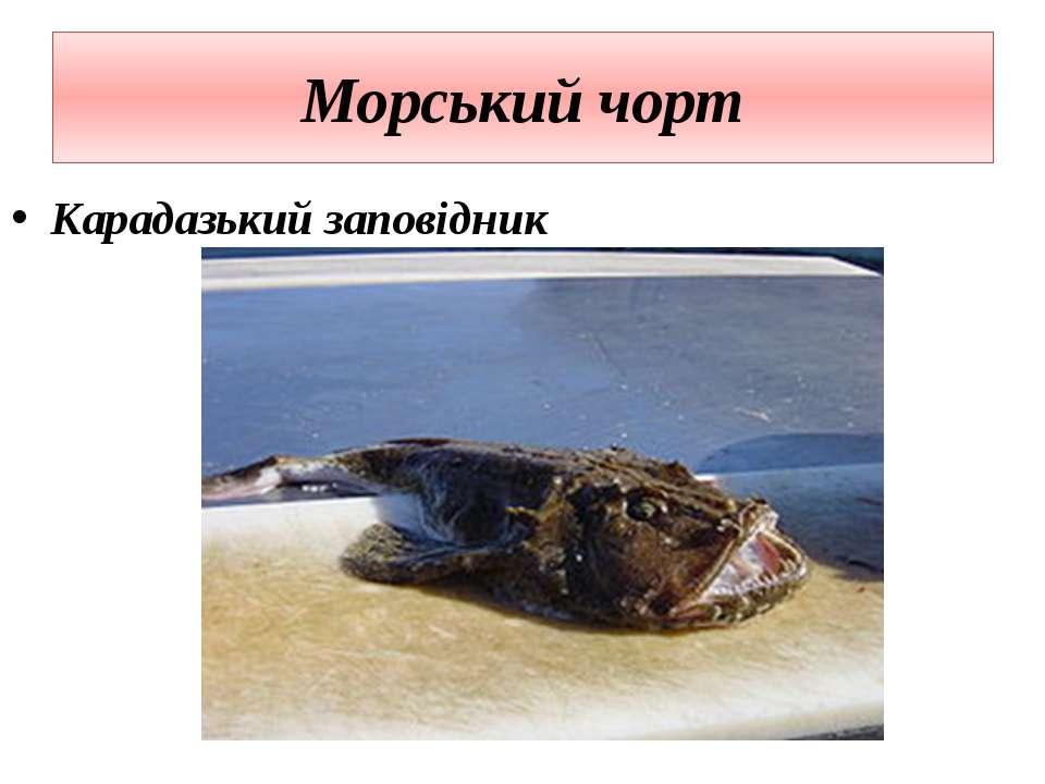 Морський чорт Карадазький заповідник