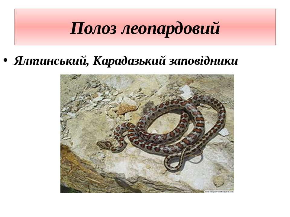 Полоз леопардовий Ялтинський, Карадазький заповідники