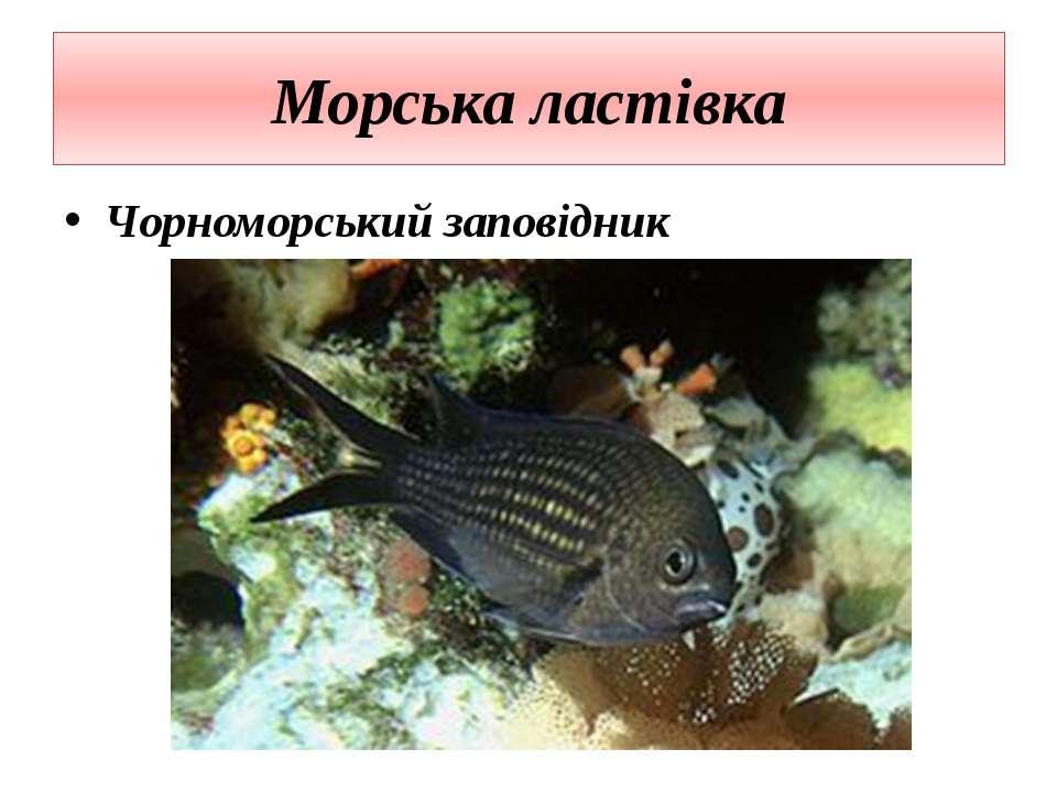 Морська ластівка Чорноморський заповідник
