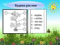 1 - корінь 2 - стебло 3 - листки 4 - квітка 5 - плід Будова рослин
