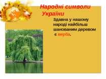 Народні символи України Здавна у нашому народі найбільш шанованим деревом є в...