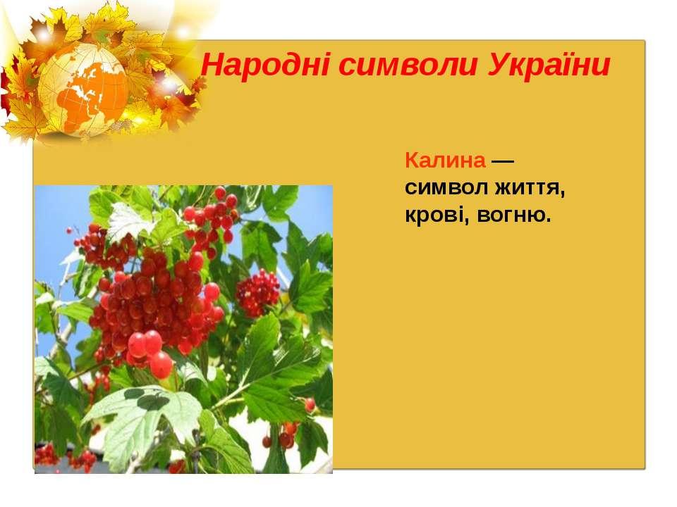 Народні символи України Калина — символ життя, крові, вогню.