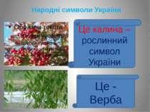 Народні символи України Це калина – рослинний символ України Це - Верба