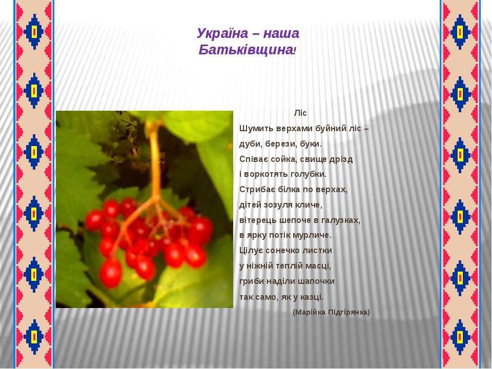 Україна – наша Батьківщина! Ліс Шумить верхами буйний ліс – дуби, берези, бук...
